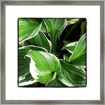 Depth Framed Print by Susan Wood