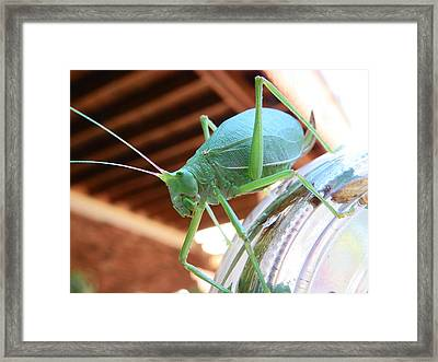 Framed Print featuring the photograph Descending The Glass Prison by Chad and Stacey Hall