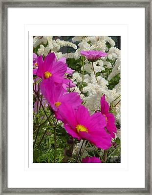 Framed Print featuring the photograph Descendingly Pink by Frank Wickham