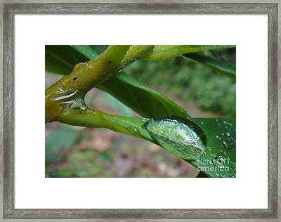 Descent Framed Print by Nika One