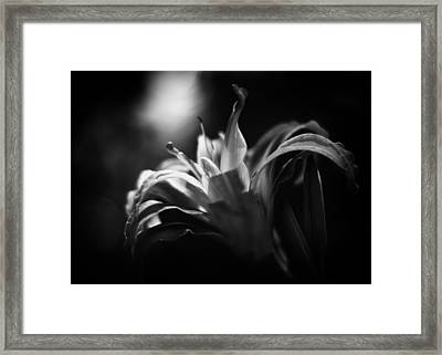 Descent Of The Spirit Framed Print by Rebecca Sherman