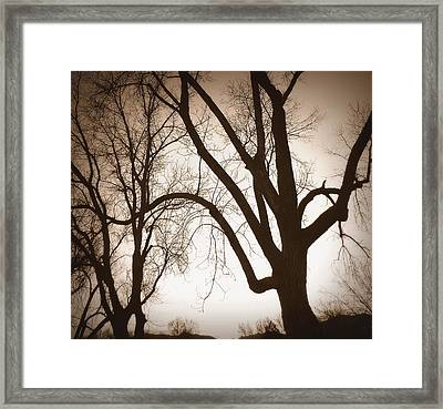 Desepiants Framed Print by Dan Stone