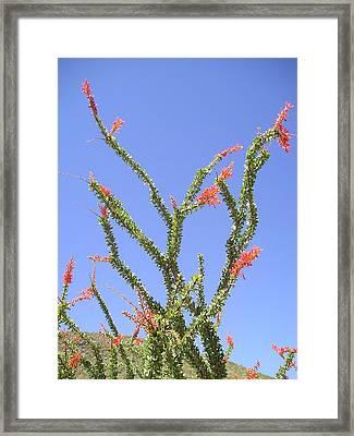 Desert Bloom Framed Print by