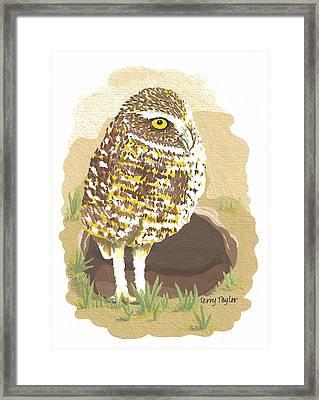 Desert Burrowing Oil Framed Print