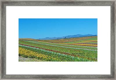 Desert Colors 3 Framed Print by Jean Paul LeBlanc