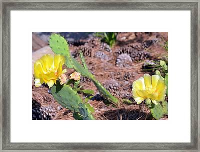 Desert Flower  Framed Print by Tanya Tanski