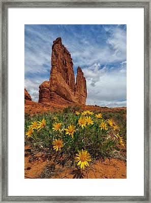 Desert Flowers Framed Print by Charlie Choc