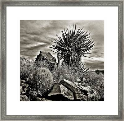 Framed Print featuring the photograph Desert Garden by Thomas Born