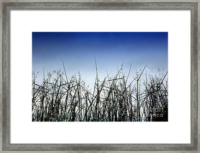 Desert Grass Framed Print by Antoni Halim