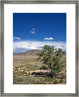 Desert In New Mexico Framed Print