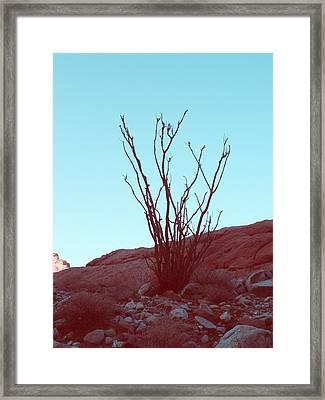 Desert Plant Framed Print