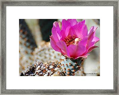 Framed Print featuring the photograph Desert Rose by Tonia Noelle