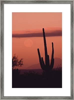 Desert Scene With Full Moon And Saguaro Framed Print by Ralph Lee Hopkins