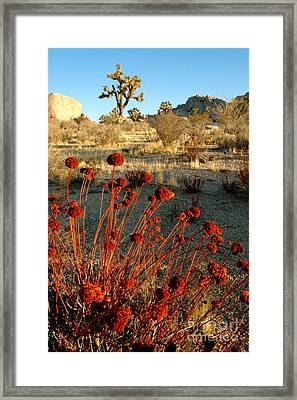 Framed Print featuring the photograph Desert Surprise by Johanne Peale