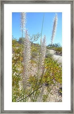 Framed Print featuring the photograph Desert Trail by Kume Bryant