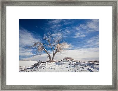 Desert Tree In White Sands Framed Print by Ralf Kaiser