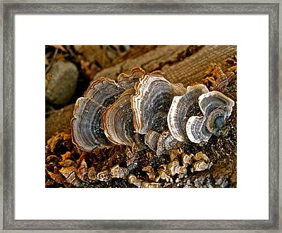 Designs By Nature - Fp10 - Tree Trunks  Framed Print by Felix Zapata