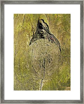 Designs By Nature - Fp9 - Trees - Lady Of The Park  Framed Print