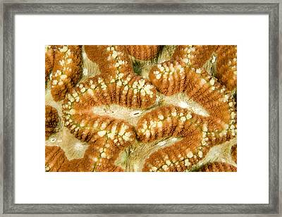 Detail Of A Hard Coral Framed Print