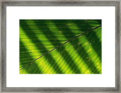 Detail Of A Large Leaf With Shadows Framed Print by Bill Curtsinger