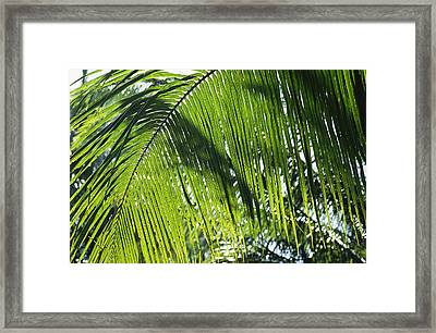 Detail Of A Palm Frond Framed Print