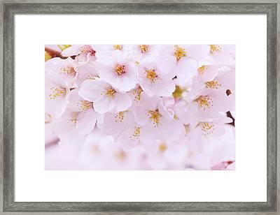 Detail Of Flower Petals Framed Print by Imagewerks