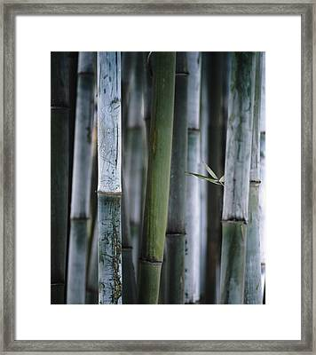 Detail Of Green Bamboo In Bamboo Park Framed Print by Axiom Photographic