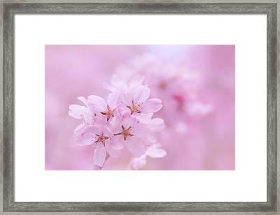 Detail Of Oriental Cherry Tree Framed Print by Imagewerks