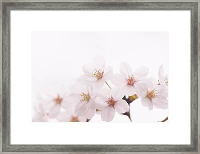 Detail Of White Flower Framed Print by Imagewerks