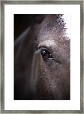 Detailed Close Up Of Black Horse's Eye Framed Print