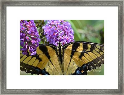 Detailed Wings Framed Print by Kathy Gibbons