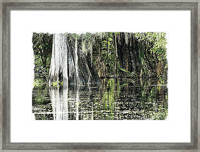 Details Of A Florida River Framed Print by Janie Johnson