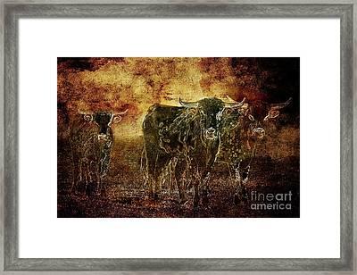 Devil's Herd - Texas Longhorn Cattle Framed Print by Cindy Singleton