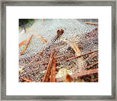 Framed Print featuring the photograph Dew Among The Needles by Chad and Stacey Hall