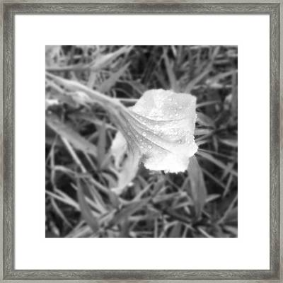 Dew Framed Print by Chasity Johnson
