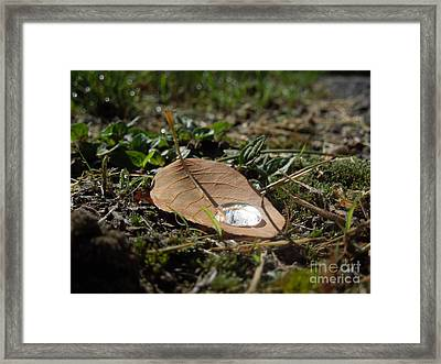 Dew Collector Framed Print by Linda Seacord