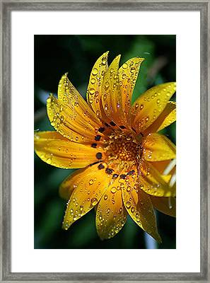 Dew-dipped Wildflower Framed Print