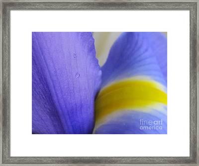 Framed Print featuring the photograph Dew Drop by Arlene Carmel