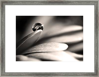 Dew Drop In Flower Petal Framed Print by Sumit Mehndiratta