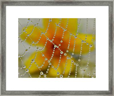 Dew Drop In Framed Print