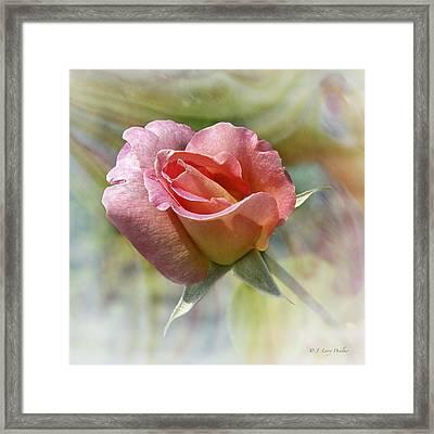 Dew Drop Pink Rose Framed Print
