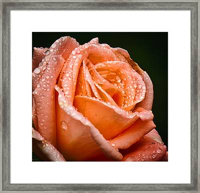 Dew Drop Tangerine Framed Print by Michael Putnam