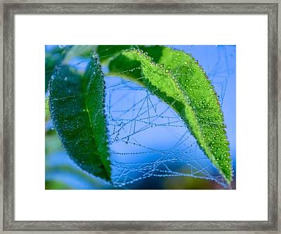 Dew Droplets Framed Print by Brian Stevens