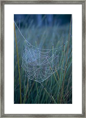Dew Drops Cling To A Spider Web Framed Print