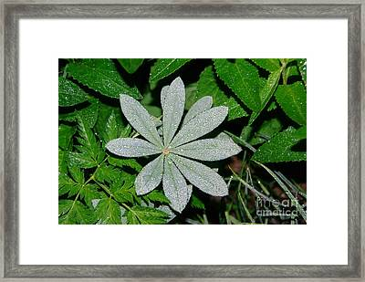 Dew Drops In The Morn  Framed Print by Jeff Swan