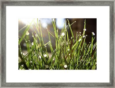 Dew Framed Print by Emanuel Tanjala