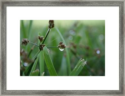 Dew Framed Print by Jessica Jandayan