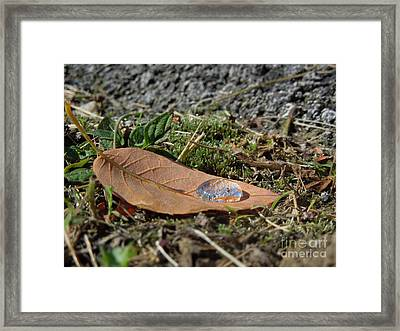 Dew Magnifier Framed Print by Linda Seacord