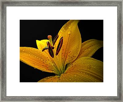 Framed Print featuring the photograph Dew On The Daylily by Debbie Portwood