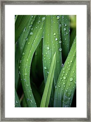 Dew To You Framed Print by Empty Wall